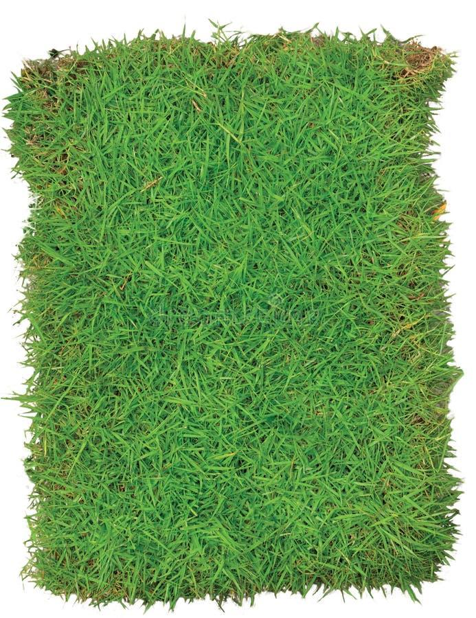 Arena das gramas verdes isolada no fundo branco imagens de stock