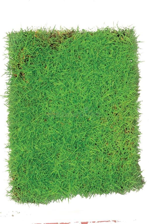 Arena das gramas verdes isolada no fundo branco imagem de stock