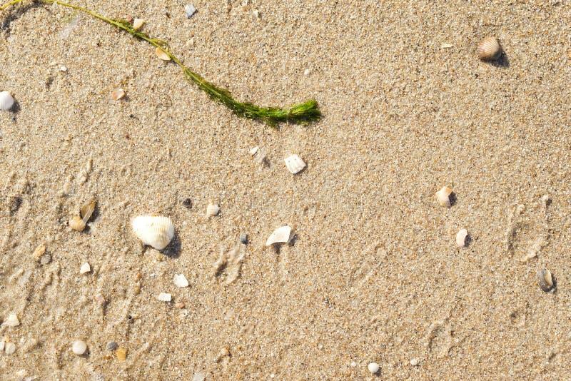 arena de mar en el primer de la playa Fondo detallado fotos de archivo