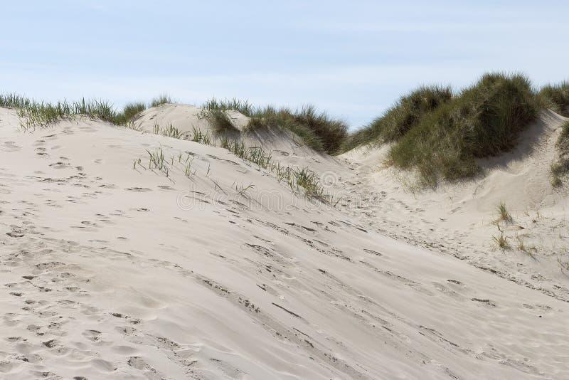 Arena e hierba en una duna imagen de archivo libre de regalías