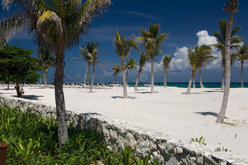 Arena y palmas blancas del océano de México