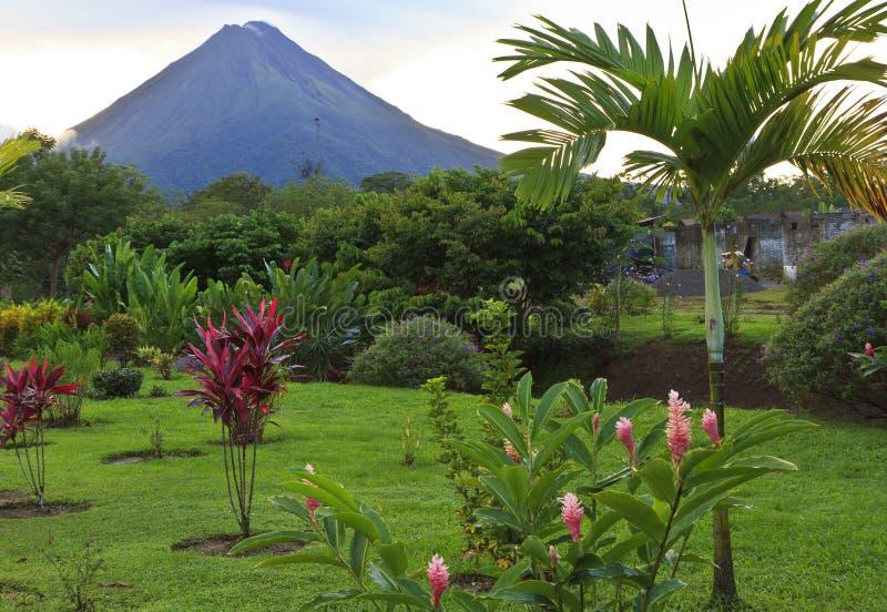 Arenal Vulkaan en Palm royalty-vrije stock afbeelding