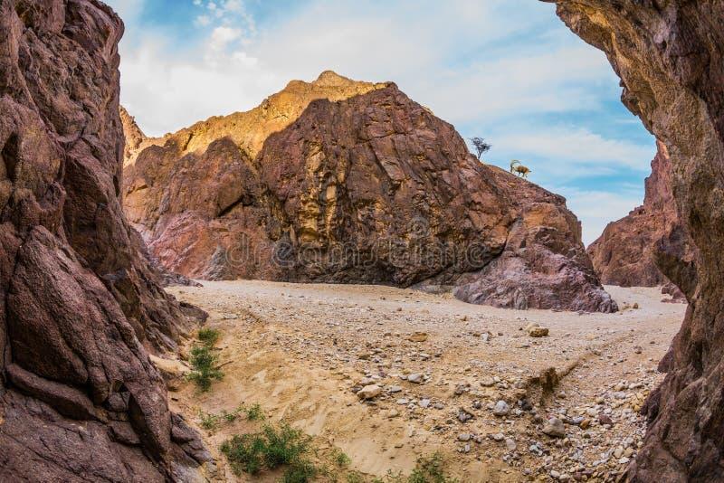 Arenaria arancio e rosa fotografia stock libera da diritti