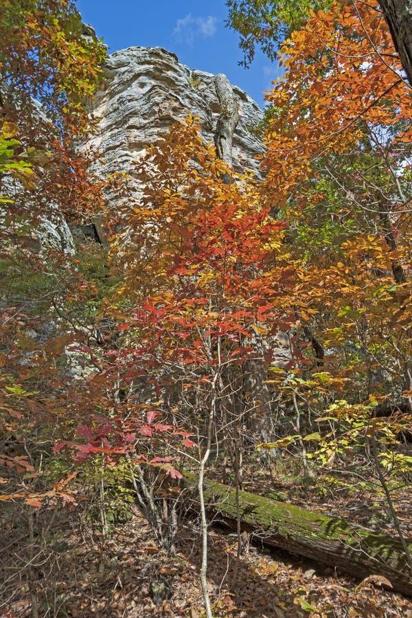 Arenito Cliff Looking sobre a floresta da queda de Coloful imagens de stock royalty free