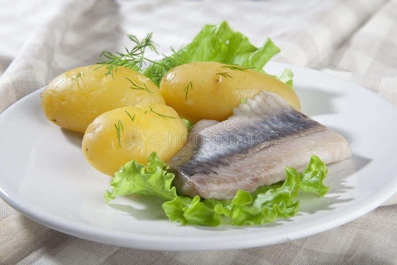 Arenques con la patata hervida fotos de archivo