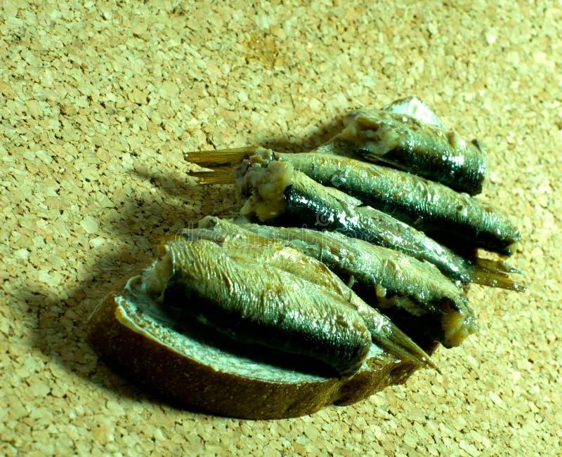 Arenques pequenos Báltico   fotografia de stock royalty free