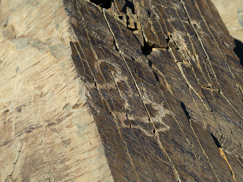 Argali y ciervos antiguos, petroglifos fotos de archivo