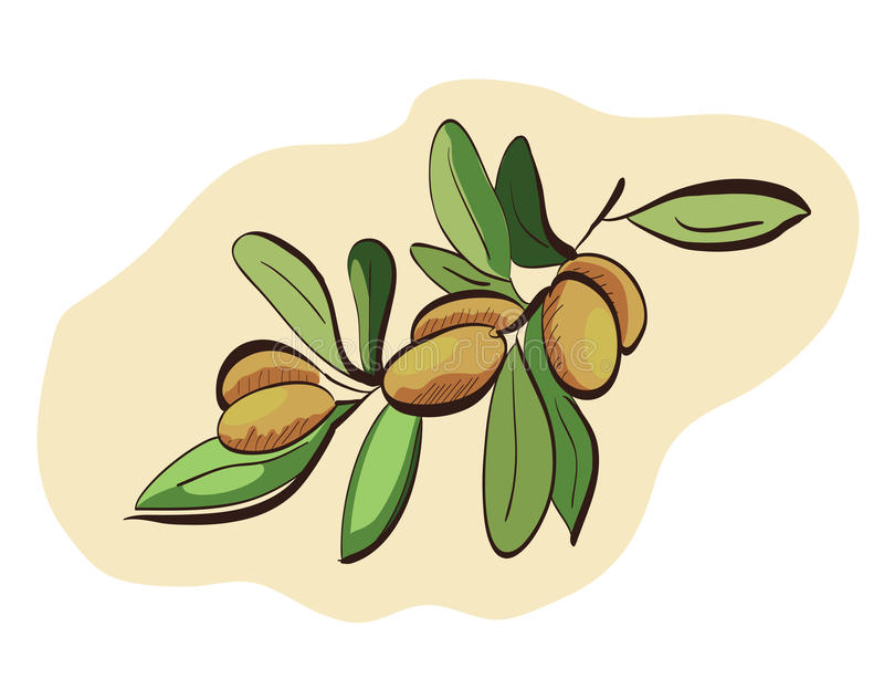 Argan fruits on branch. Clip-art, Illustration stock illustration