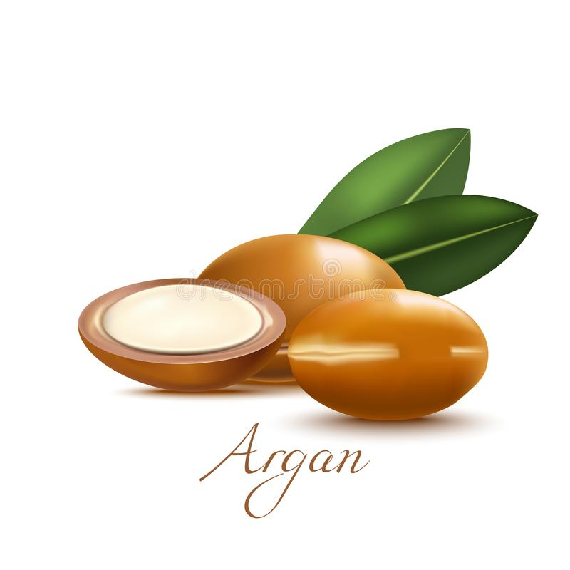 Argan Nuts and Leaves in Realistic Style. Argan Nuts and Leaves. Realistic Elements for Labels of Cosmetic Skin Care Product Design. Vector Isolated Illustration royalty free illustration