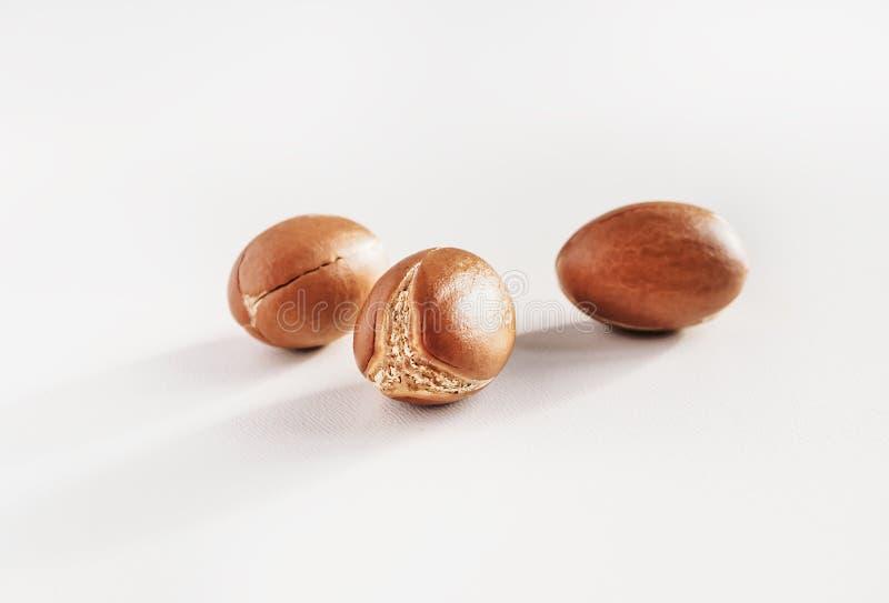 Argan Nuts Semi di argania spinosa su bianco, una fine su isolata su bianco fotografia stock