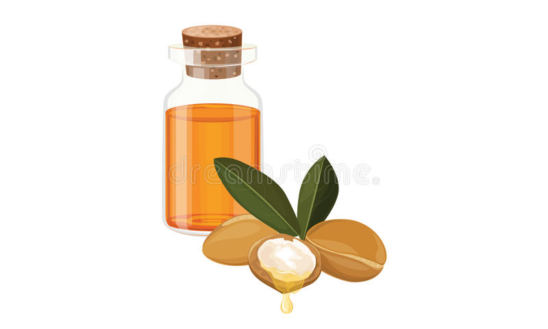 Argan oil. In a glass bottle ,nuts, fruits , Vector illustration vector illustration