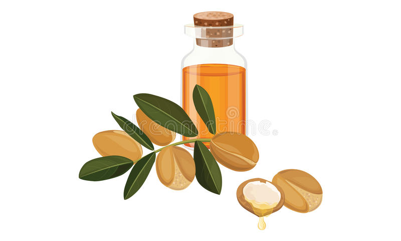 Argan oil. In a glass bottle ,nuts, fruits , Vector illustration stock illustration