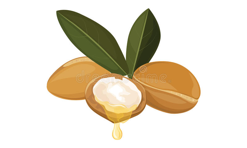 Argan oil. Nuts, fruits , Vector illustration royalty free illustration
