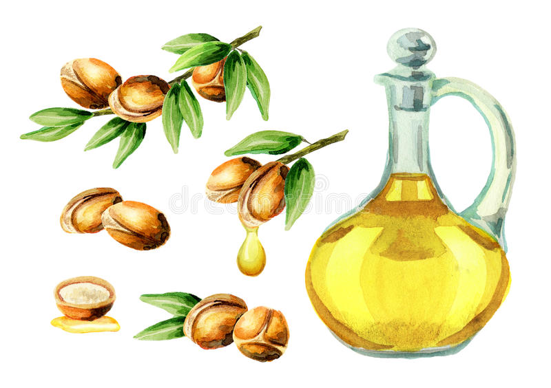 Argan oil set. Watercolor hand-drawn illustration vector illustration