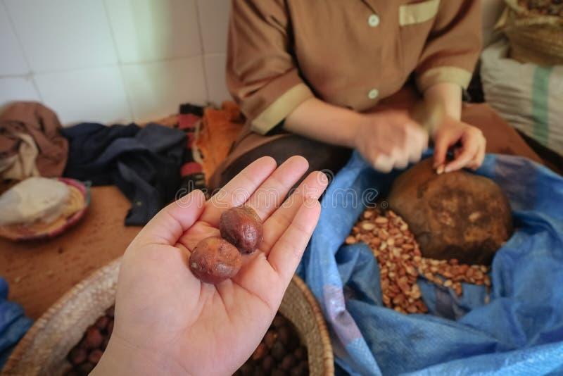 Argan owoc essaouira Morocco obraz royalty free