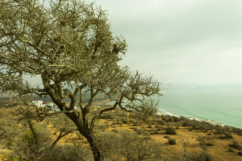 The argan tree in hight of the montain stock photos