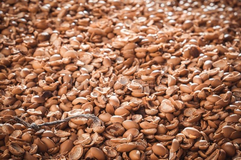 Argannussoberteile außerhalb der Industrie in Essaouira lizenzfreie stockbilder