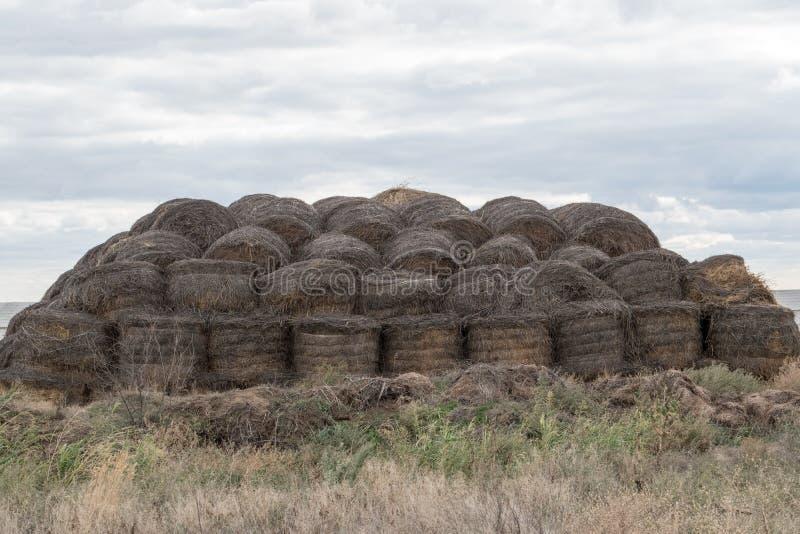 Arge奶牛场 状态农场提供牛奶和肉给整个伏尔加格勒地区 免版税库存照片