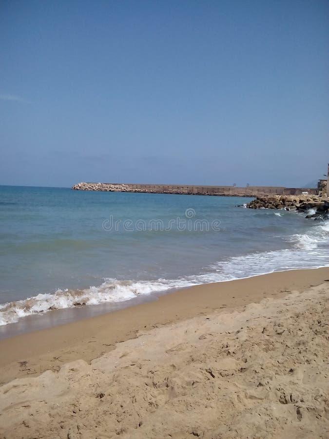 Argelia osean foto de archivo libre de regalías