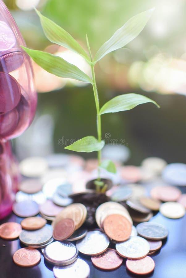 Argent économisant de petits arbres photos stock