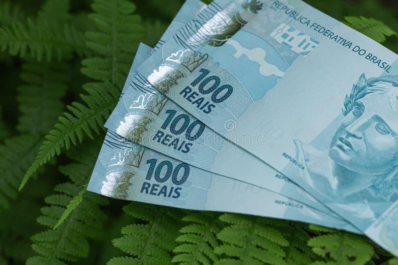 Argent brésilien, 100 billets de banque de reais disposés sur les feuilles vertes, concept la jungle d'Amazone de Brésilien photo libre de droits