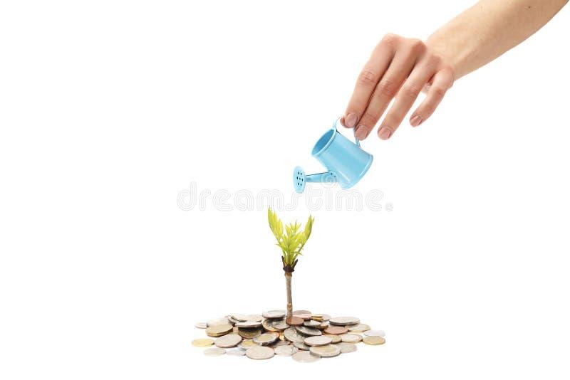 Argent de pièces de monnaie et usine croissante sur la rangée de l'argent de pièce de monnaie Concept d'investissement et d'écono photographie stock