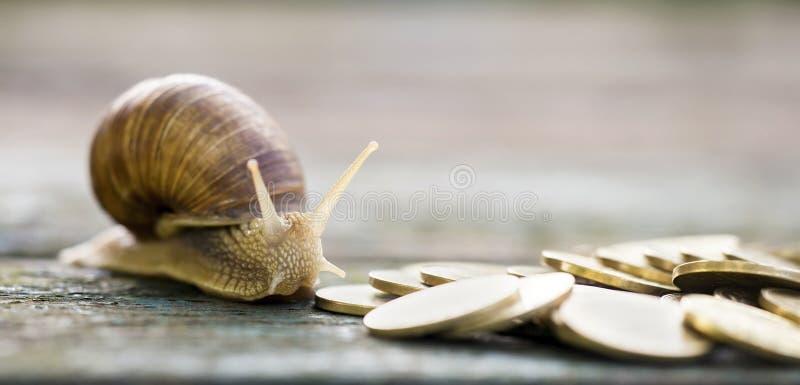 Argent et escargot photo libre de droits