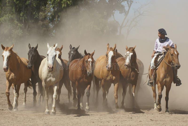 Argentijnse Paarden, Pampa, Argentinië royalty-vrije stock foto's