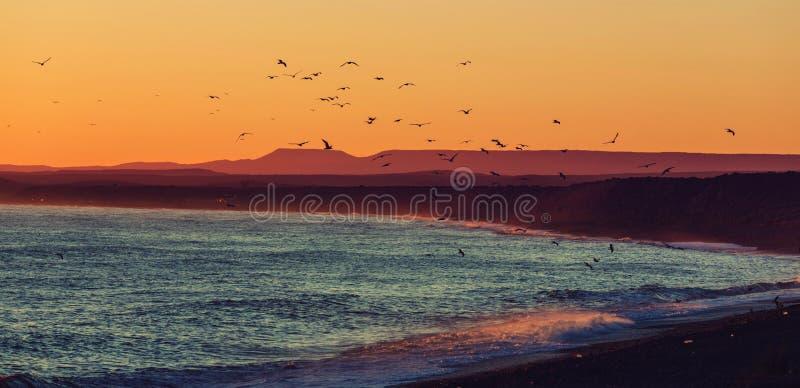 Argentina coast royalty free stock photography