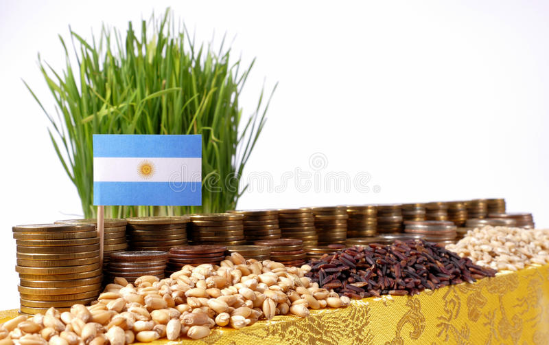 Argentina flag waving with stack of money coins and piles of seeds. Argentina flag waving with stack of money coins and piles of wheat and rice seeds royalty free stock photography