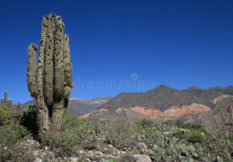 argentina kaktusliggande arkivfoto