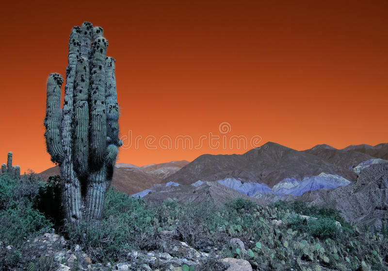 argentina kaktusliggande royaltyfri bild
