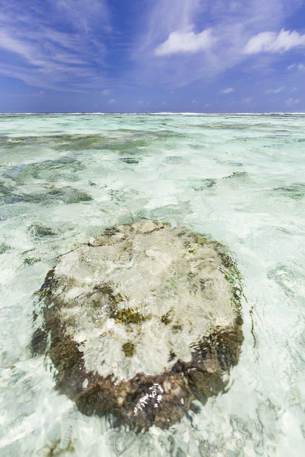 Argento del ` di fonte D di Anse, La Digue, Seychelles fotografie stock