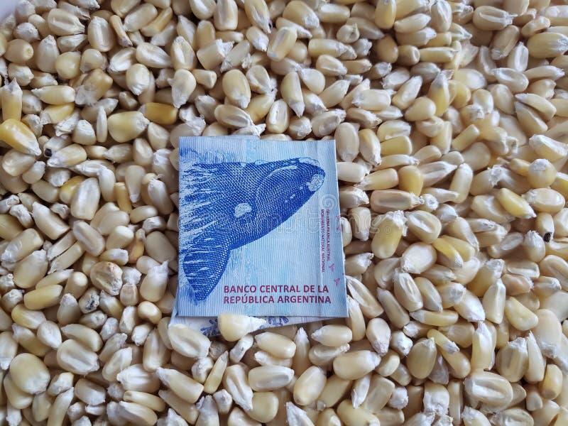 Argentyna, kukurydzy inscenizowania kraj, suche kukurudz adra i Argentine banknot 200 peso, fotografia royalty free