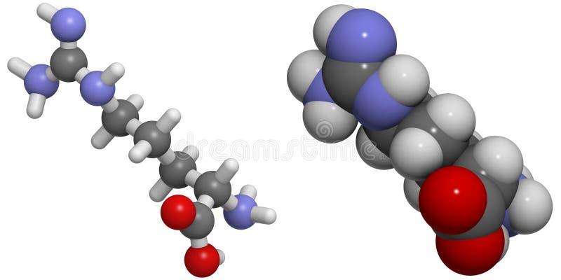Arginine (Arg, R) Molekuła royalty ilustracja
