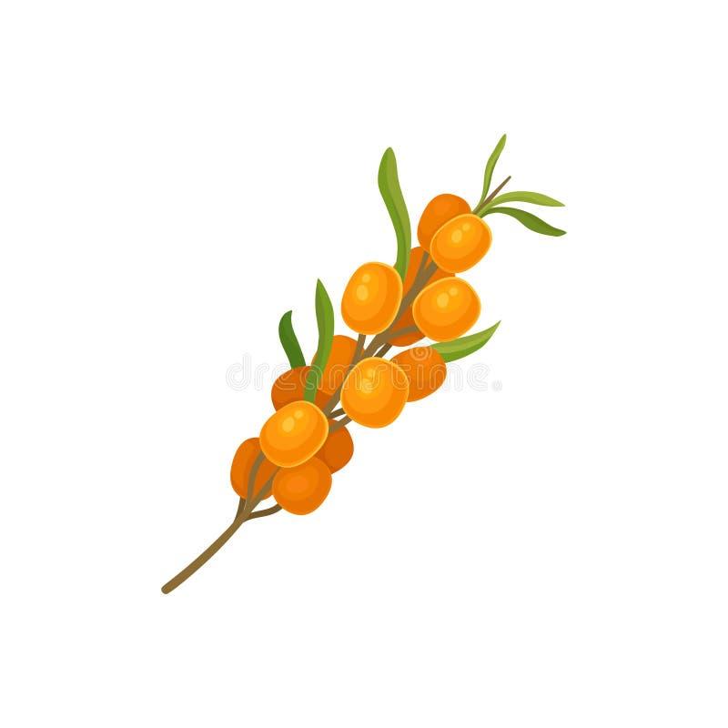 Argousier orange sur une tige Illustration de vecteur illustration de vecteur