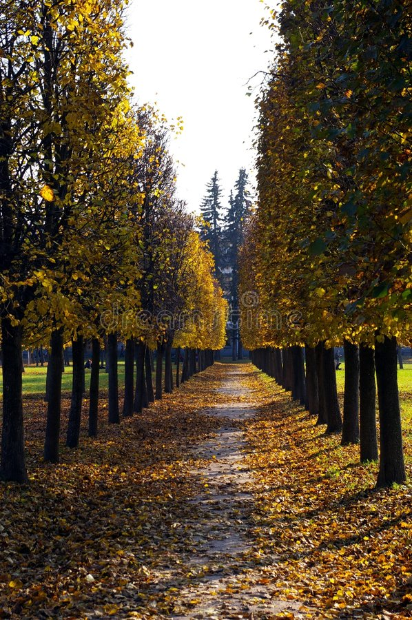 Arhangelskoe. The photo is made in an early autumn. On it the manor avenue in Arkhangelsk is represented. Time of days - day stock photography
