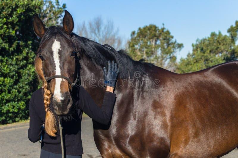 Aria aperta di picchiettamento di affetto di addestramento della donna del cavallo immagine stock libera da diritti