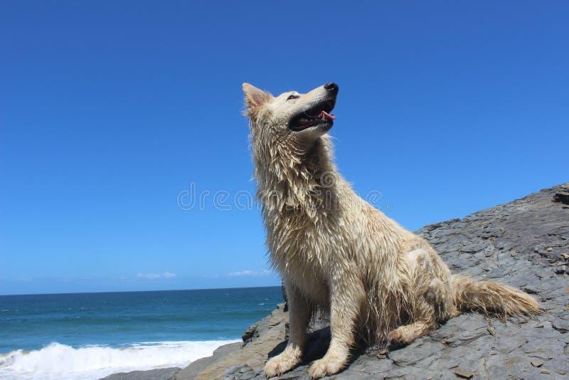 Aria aperta felice bianca del cane di animale domestico dall'oceano fotografia stock libera da diritti