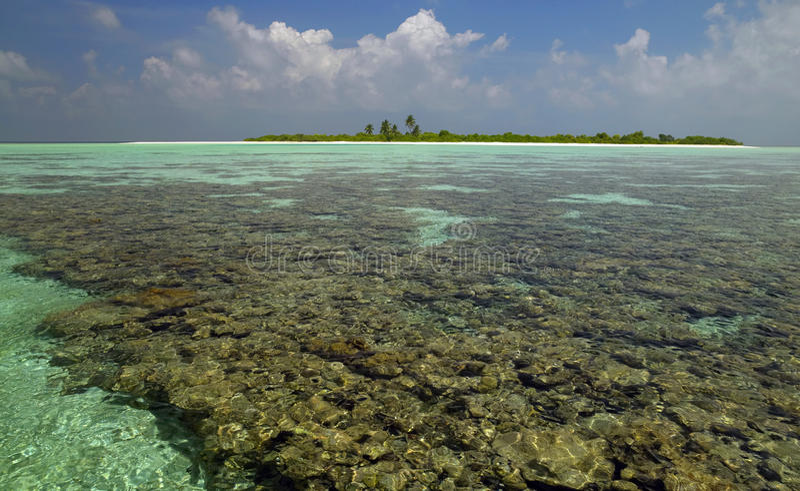 ariatollkorall maldives revar södra royaltyfria bilder