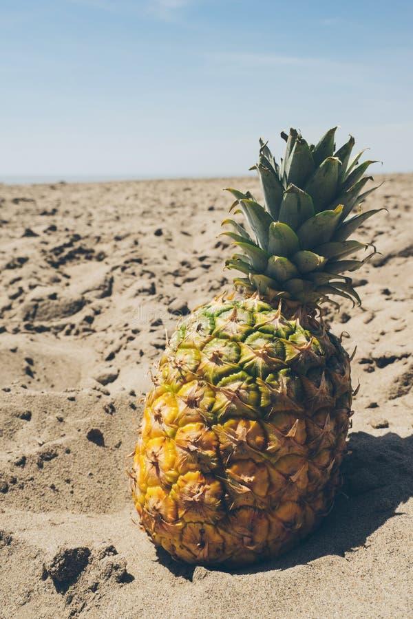 Arid, Beach, Beachlife royalty free stock photography