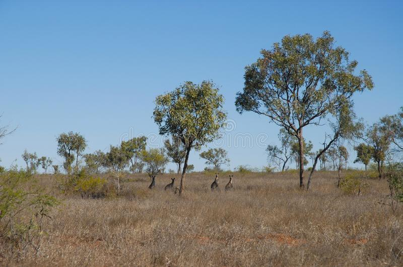 Arid, dry landscape, Outback Queensland, Australia royalty free stock image
