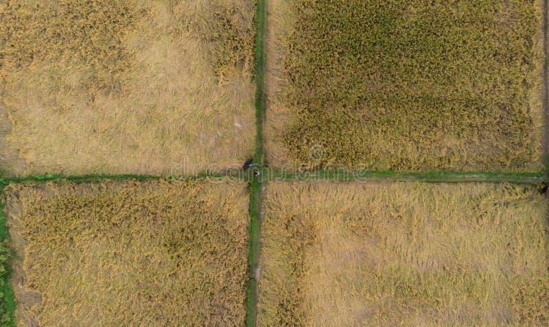 Ariel sköt av ett risfältfält rektangulär matris med fyra askar royaltyfri fotografi