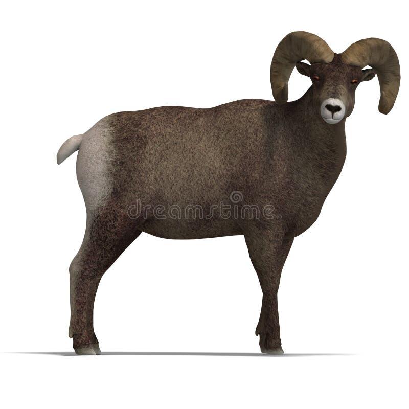Aries grande de las ovejas del claxon ilustración del vector