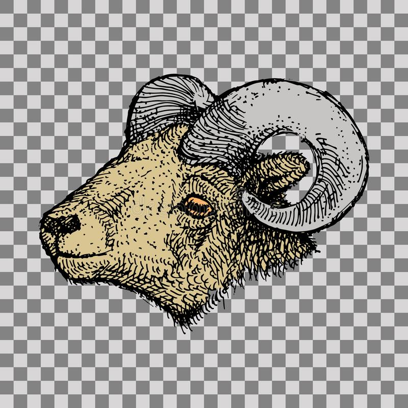 Aries Zodiac Sign royalty-vrije illustratie