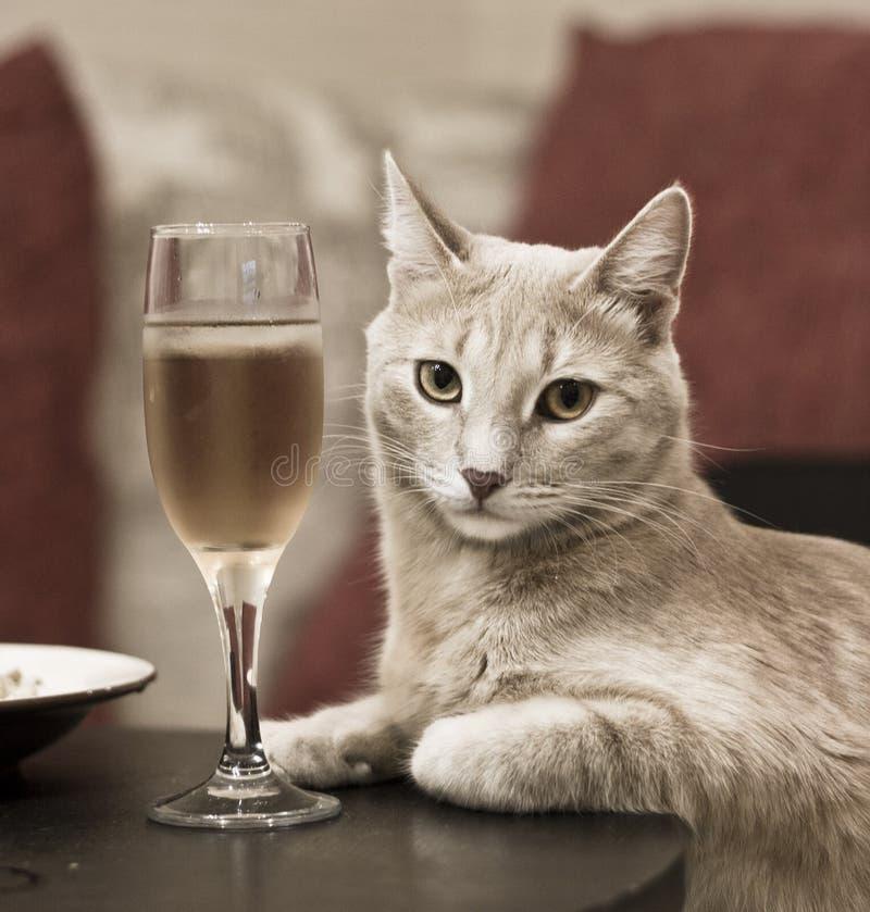 Aristócrata de marfil con clase que se sienta en la tabla con un vidrio de vino imagen de archivo
