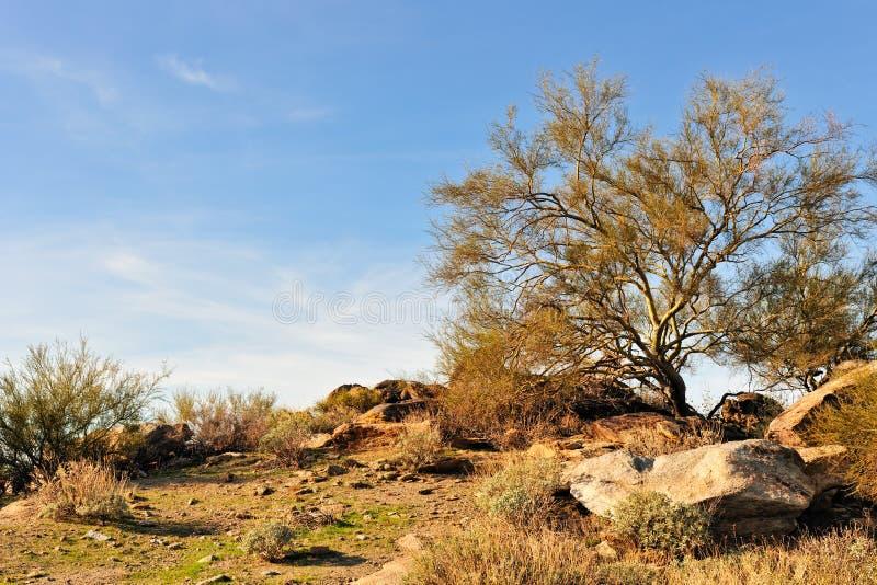 arizona ökenliggande royaltyfri foto