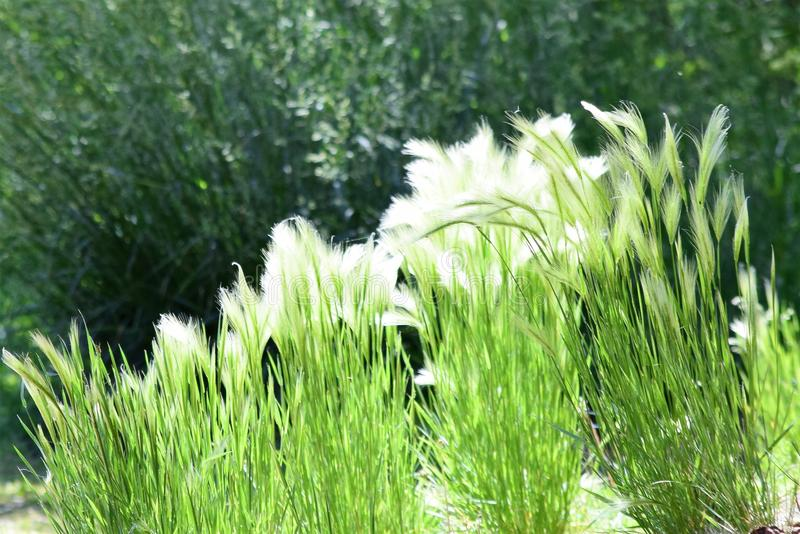 arizona imagen de archivo