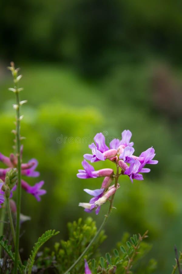 Arizona-Blüte des Sommers lizenzfreies stockfoto