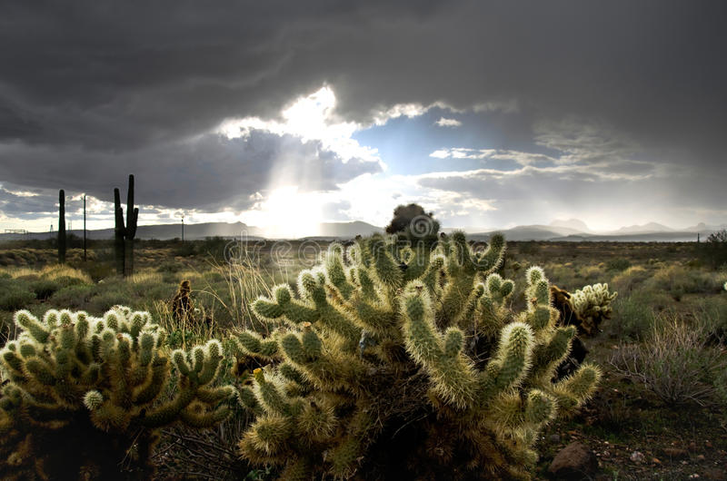 Arizona desert. The beautiful Arizona desert is getting a shower. But after a shower, there's of course plenty of more sun royalty free stock photography